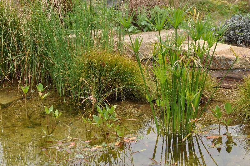 Bassin de r g n ration rennes artisan paysagiste rennes bretagne - Plantes filtrantes bassin rennes ...