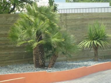 Plantation Palmiers - Cesson sévigné