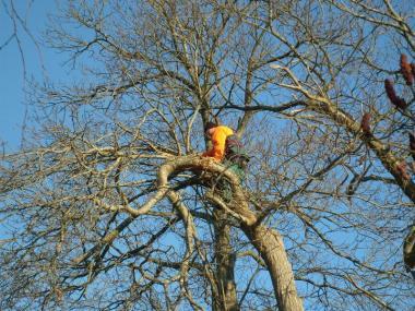 Elagage d'un arbre - Rennes