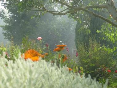 Beau jardin fleuri - Pacé