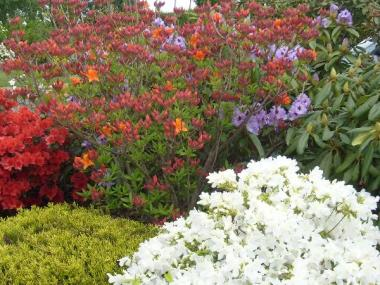 Floraison printanière - Rennes