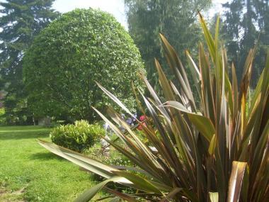 Entretien de jardin - Pacé