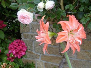 Belle floraison - Rennes